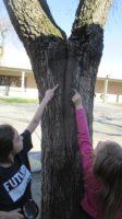 tree, split, nature, Nature Detectives, outside, field study