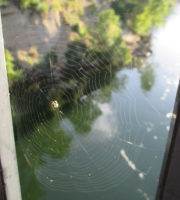 spider web, American River, bridge, water, web, insects, Nature Detectives