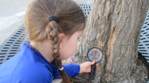 investigate, magnifying glass, explore, tree bark, Nature Detective, fun, engage, observe,